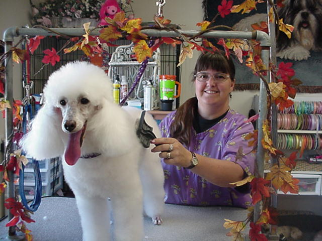 Shampoodles Dog Grooming